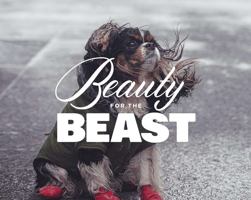 beauty_1